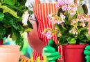 Как спасти комнатные растения от нашествия мошек?